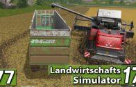 Rüben, Schweine und Getreide ► LS17 | Landwirtschafts Simulator 17 #77